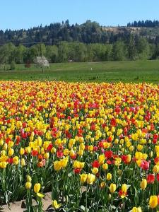 BEautiful fields of flowers on promised on your journey!