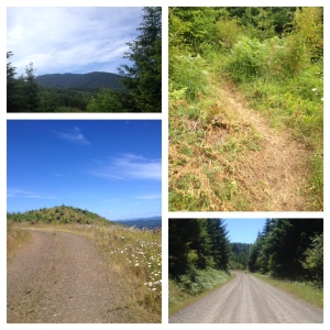 Mary's Peak 50k/25k Scenery